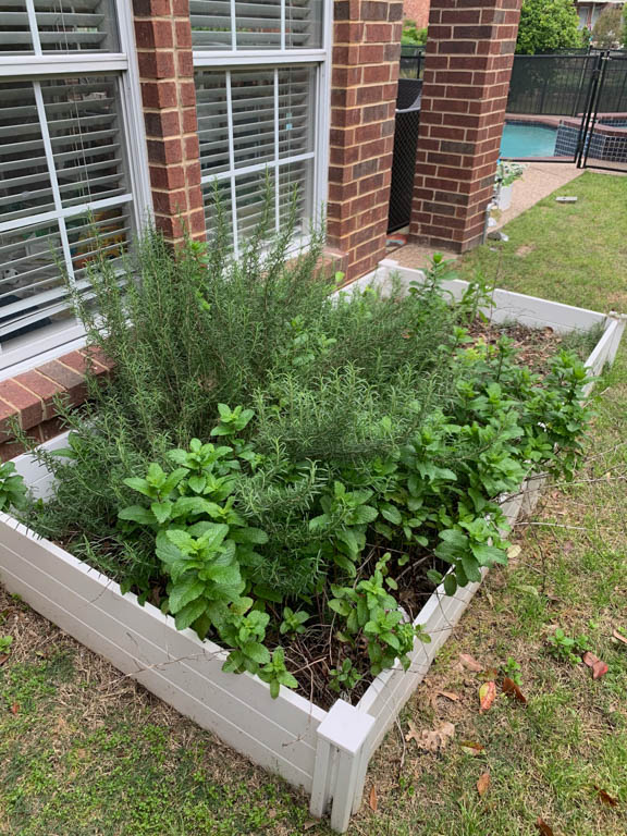 Before photo of the garden